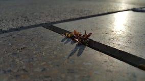 Stark liten växt fotografering för bildbyråer