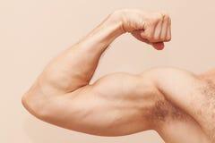 Stark manlig arm med biceps arkivfoto