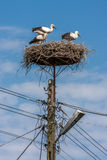 Stark in nest Stock Photo