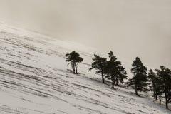 Stark pine trees against snow mountain and fog, black and white landscape, scottish glen, glen rinnes, march. Slope Stock Photos
