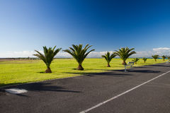 Stark promenade. A Simple clean roadside promenade with short palm trees Royalty Free Stock Photos