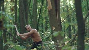 Stark skogvaktare som långsamt hackar ett träd i en skog arkivfilmer