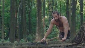 Stark skogvaktare som långsamt hugger av ett träd med yxa i en skog arkivfilmer