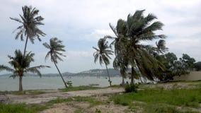 Stark vind på Koh Samui Thailand Landskapet av havet, gömma i handflatan trädet, havet och fartyget arkivfilmer