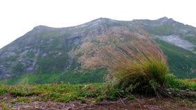 Stark vind vippar på gräset mot bakgrunden av mounen arkivfilmer