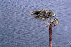 Stark wind Arkivbilder