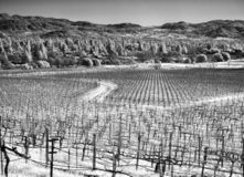 Napa Valley vineyard, black and white royalty free stock images