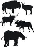 starka djursilhouettes Arkivbilder