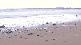 Starka havsvågor på den sandiga kusten Skal av rapan på sanden arkivfilmer