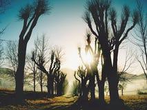 Starka solstrålar som bryter till och med nedgångträd royaltyfri bild