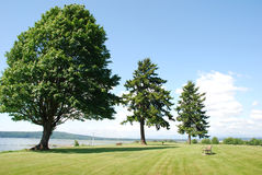 Starke Bäume Lizenzfreie Stockfotografie