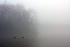 Starke Decke des Nebels bedeckt See, während Enten schwimmen Lizenzfreie Stockfotos