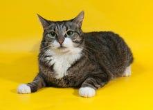 Starke gestreifte Katze liegt auf Gelb Lizenzfreies Stockbild