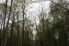 Starke grüne Bäume im Park lizenzfreie stockbilder
