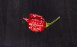 Starke Peperoni Carolina Reapers Lizenzfreie Stockbilder
