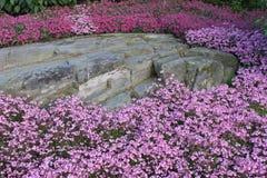 Starke Schönheit von Blumen Lizenzfreies Stockfoto