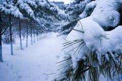 Starke Schneefälle Stockbild