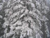 Starke Schneefälle auf Bäumen Stockfotografie
