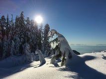 Starke Schneefälle auf Zypresse-Berg Stockbild