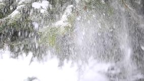 Starke Schneefälle, die von einem Baum fallen stock video