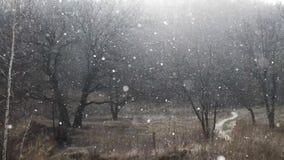 Starke Schneefälle fallen unten nahe zum dunklen Winterwald stock video footage