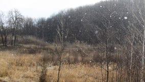 Starke Schneefälle fallen unten nahe zum dunklen Winterwald stock footage