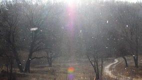 Starke Schneefälle fallen unten nahe zum dunklen Winterwald stock video
