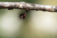 Starke und fleißige Ameise trägt Samen Lizenzfreies Stockbild