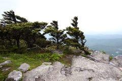 Starke Winde beeinflussen das Wachstum von Bäumen und von Büschen am großväterlichen Berg, NC Lizenzfreie Stockbilder