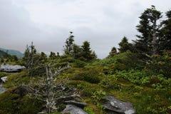 Starke Winde formen die Bäume und die Anlagen an der Spitze des großväterlichen Berges, NC Lizenzfreies Stockfoto