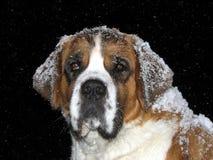 Starker Hund Stockfoto