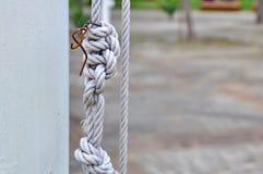 Starker Knoten Stockbilder