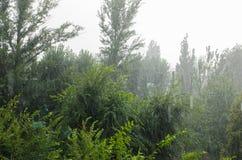 Starker Regen über hohen grünen Bäumen lizenzfreie stockbilder