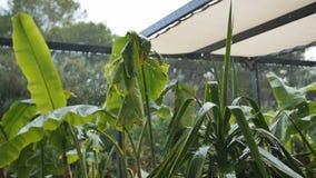 Starker Regen auf dem Hinterhof mit Palmen stock video footage