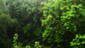 Starker Regen, der in den Park, Bäume im Hintergrund fällt stock footage