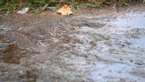 Starker Regen im Garten stock footage