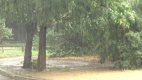 Starker Regen im Stadt-Park stock video footage