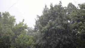 Starker Regen, starker Wind rüttelt die Niederlassungen von Bäumen, Regen-Wasser-Abflüsse stock footage