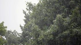 Starker Regen, starker Wind rüttelt die Niederlassungen von Bäumen, Regen-Wasser-Abflüsse stock video