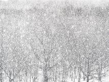 Starker Schneesturm über Holz im Wald im Winter stockfotografie