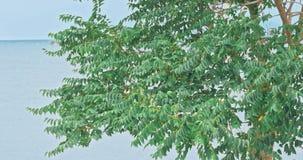 Starker Sturmwind beeinflußt die Bäume stock video