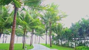 Starker Wind rüttelt Niederlassungen von hohen Palmen im tropischen Park stock footage