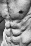 Starkes athletisches Mann-Eignungs-Modell Torso Vervollkommnen Sie sechs Satz-ABS Stockfoto