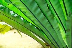 Starkes Dschungelgrün an einem glänzenden Tag des hellen Sonnenscheins mit heißem warmem Wetter Schnelles Wachstum bewegt sich au Stockfotografie