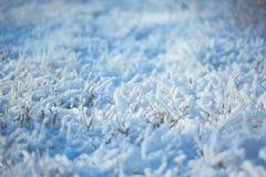 Starkes eisiges Gras mit Eiskristallen Lizenzfreie Stockfotos