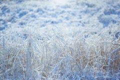 Starkes eisiges Gras mit Eiskristallen Lizenzfreie Stockfotografie