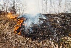 Starkes Feuer im Wald auf dem See Viel Rauch auf dem BAC lizenzfreies stockfoto