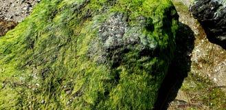 Starkes grünes Moos lizenzfreie stockbilder