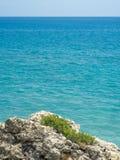 Starkes Gras auf rauen Felsen durch blaues Mittelmeer im Sommer Lizenzfreies Stockfoto