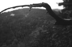 Starkes Spinnennetz Stockbilder